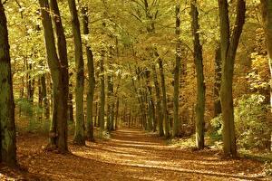Картинки Осень Леса Деревья Листья Природа