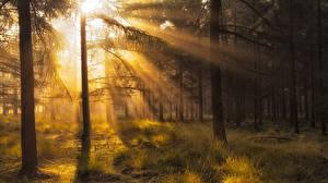 Фотографии Осенние Леса Деревья Лучи света Траве Природа