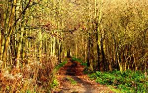 Обои Осень Дороги Лес Природа