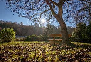 Картинки Осень Деревья Скамья Трава Листья Солнце Ветвь