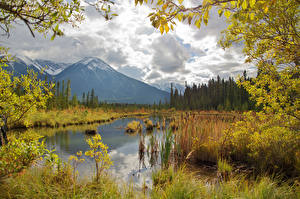 Фотография Канада Осенние Горы Озеро Пейзаж Ветвь Vermilion Lakes Природа