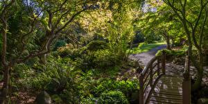 Фото Канада Парки Мосты Кусты Деревья East Sooke Park Природа