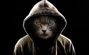 Фото Кошки Оригинальные Смотрит Капюшон Черный фон Животные