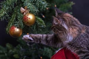Картинка Новый год Кошки Ель Шар Лапы Животные