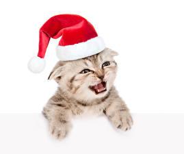 Обои Новый год Коты Белом фоне Котенок Шапки Смотрит животное
