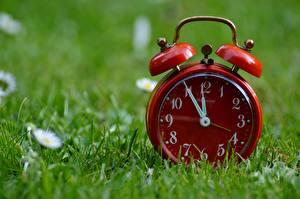 Обои Часы Циферблат Будильник Крупным планом Трава