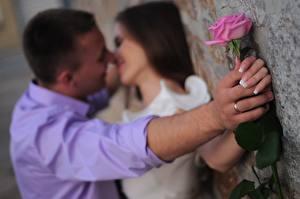Фотографии Любовники Мужчины Розы 2 Руки Кольцо Поцелуй Девушки