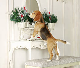 Картинки Собака Бигля Вазе