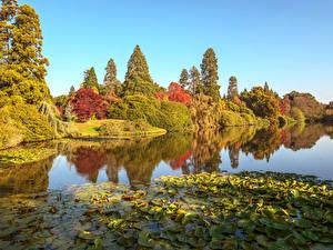 Фотография Англия Осенние Парк Пруд Дерево Листья Sheffield Park Природа