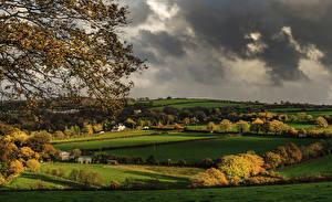 Картинка Англия Поля Осенние Деревья Luckett Cornwall Природа