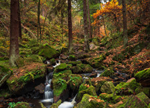 Фото Англия Леса Осень Камни Мох Ручей Wyming Brook Sheffield Природа