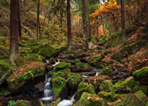 Фото Англия Лес Осень Камни Мох Ручеек Wyming Brook Sheffield Природа
