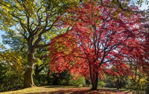 Фотография Англия Сады Осенние Деревья Clyne Gardens Swansea Природа