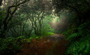 Фото Леса Осень Тропинка Листья Лучи света Природа