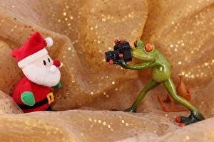 Обои Лягушки Санта-Клаус Шапки Фотокамера Фотограф