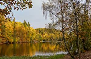 Фотография Германия Осень Река Леса Деревьев Warteberg Saxony Природа