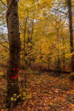 Обои Германия Осень Смайлы Ствол дерева Листва Karlsruhe Природа