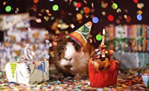 Картинки Морские свинки Рождество Свечи Пламя Подарки Смотрят Конфетти Животные