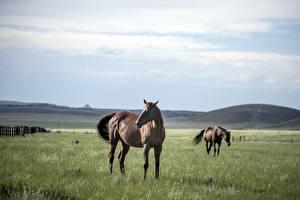 Картинки Лошадь Луга Два Траве животное