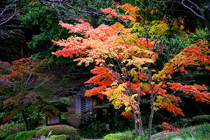 Фотография Япония Киото Парки Осенние Деревья Природа