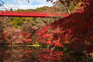 Картинка Япония Парки Пруд Мост Осенние Деревьев Izumi Nature Park Природа