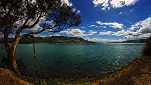 Обои для рабочего стола Новая Зеландия Берег Небо Заливы Деревья Облачно Otago Harbour Природа