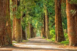 Фото Парк Лето Дороги Ствол дерева Аллея