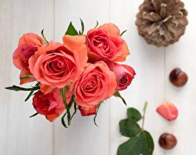 Картинки Розы Крупным планом Розовые Цветы