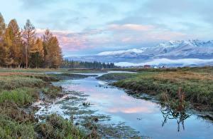 Фотография Россия Горы Леса Трава Altai Природа