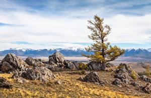 Картинки Россия Горы Камень Пейзаж Деревья Altai