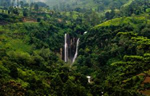 Фотография Шри-Ланка Водопады Утес Puna falls Природа