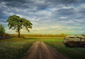 Фото Камни Дороги Лето Дерева Трава