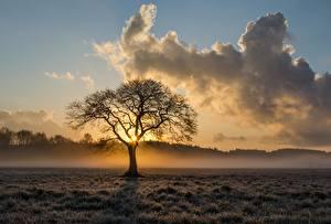 Обои Рассветы и закаты Туман Облака Деревья Трава