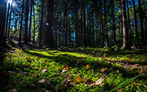Фотография Швеция Леса Деревьев Трава Листва Grödinge Природа