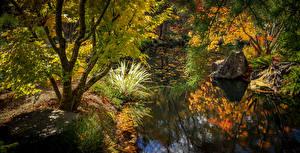 Фотографии Штаты Осень Сады Пруд Деревья Gibbs Gardens Природа
