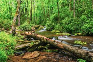 Фото Штаты Леса Камень Кусты Бревна Мох Ручей Pisgah National Forest North Carolina Природа