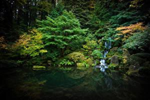 Обои США Сады Пруд Водопады Камень Мох Деревья Portland japanese garden Природа