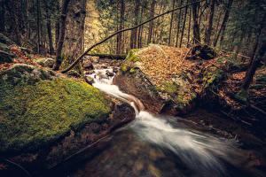 Фотография Штаты Парки Осенние Леса Камень Йосемити Листва Мох Ручей Природа