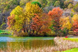 Фото Штаты Парки Осень Реки Деревья Blue Ridge Parkway Virginia Природа