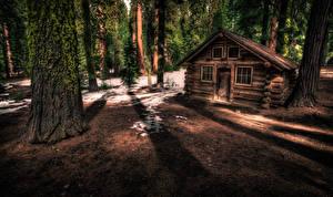 Обои США Парк Лес Дома Калифорния Йосемити Ствол дерева Мха Природа
