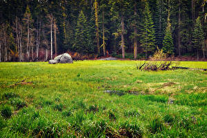 Фото Штаты Парк Лес Камень Калифорния Траве Sequoia National Park Природа