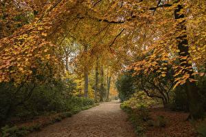 Обои Великобритания Парк Осенние Деревья Аллеи Garden Harlow Carr Природа
