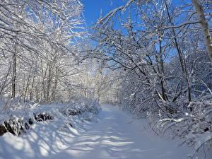 Фото Зимние Дороги Деревья Снег Ветка Природа