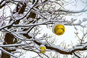 Фото Зимние Снегу Ветвь Шар