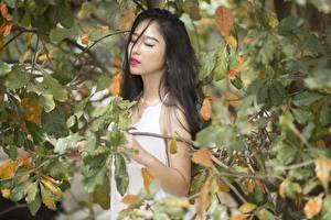 Картинка Азиаты Осенние Ветвь Листва Брюнетка