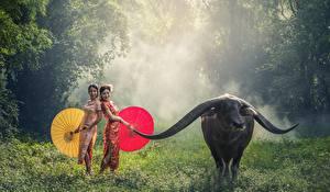 Картинки Азиаты Быки Трава Туман Зонт Рога Животные Девушки