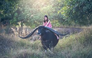 Обои Азиаты Быки Трава Рога Улыбка Сидит Животные Девушки картинки