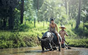 Картинка Азиаты Быки Мужчины Рога Шляпа Сидящие 2 Животные