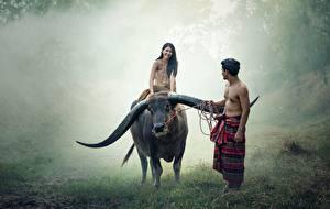 Картинки Азиаты Быки Мужчины 2 Трава Рога Сидящие Животные Девушки
