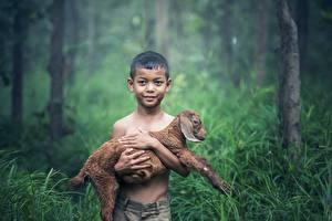 Обои Азиатки Детеныши Коза козел Трава Мальчишки Смотрит Дети